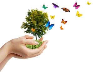 Aspecte privind mediul/ biodiversitatea